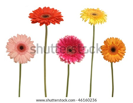 five flowers isolated on white - stock photo
