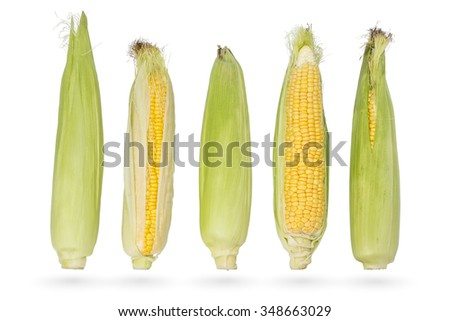 Five fresh young ears of corn isolated on a white background - stock photo