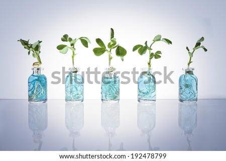 Five glass science vials with blue liquid have sprouts growing out of them with a blue tinted vignette. - stock photo