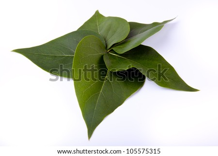 five green leaves on white background