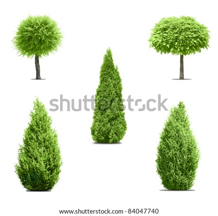 Five green trees isolated on white - stock photo