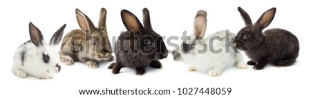 Five grey cute rabbits isolated on white background