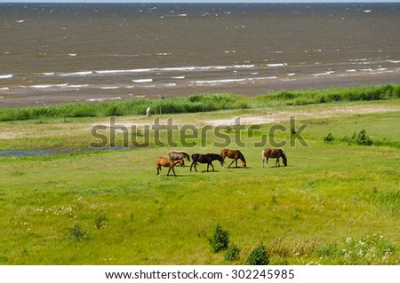Five horses grazing on the green lush meadow near the sea, overlook view - stock photo