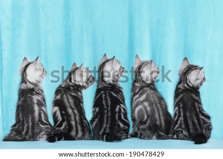 Five kitten from behind - stock photo