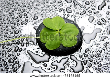 five leaf clover with zen stone on beads of dew - stock photo