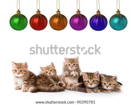 Five little kittens for present - stock photo