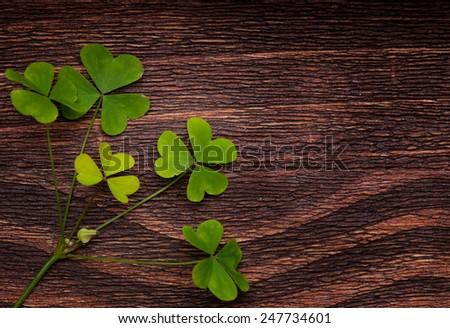 Five lucky shamrocks on a old wood vintage background - stock photo