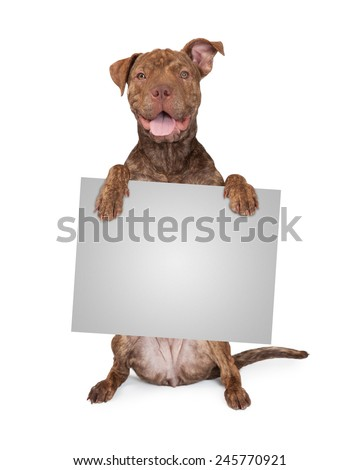 Five month old Pit Bull and Shar Pei mixed breed dog sitting up and
