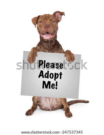 Five month old Pit Bull and Shar Pei mixed breed dog sitting up and holding a sign saying Please Adopt Me - stock photo