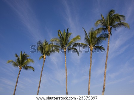 Five palm trees front a striated clouded blue sky.