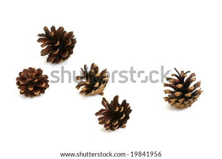 Five pine cone isolated on white background.