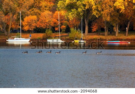 Five sail boats docking along the bank with autumn foliage. More with keyword group18  - stock photo