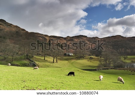 Five sheep grazing on a grassy, sunlit slope