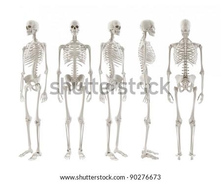 five Skeletons turnaround isolated on white background - stock photo