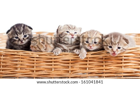five small cats kittens in basket - stock photo