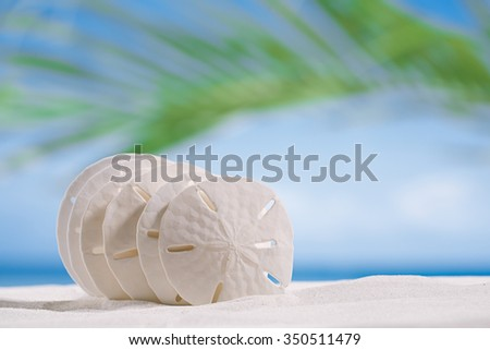 five starfish  on white sand beach with ocean , sky and seascape - stock photo