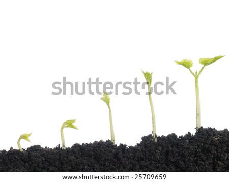 Five vegetation stages of bean plant shot over white background - stock photo