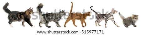 five walking cats in front of white background