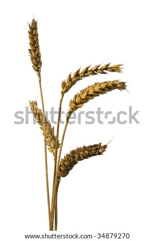 five wheat ears isolated on white