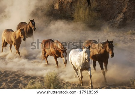 Five Wild Horses Galloping through the desert - stock photo