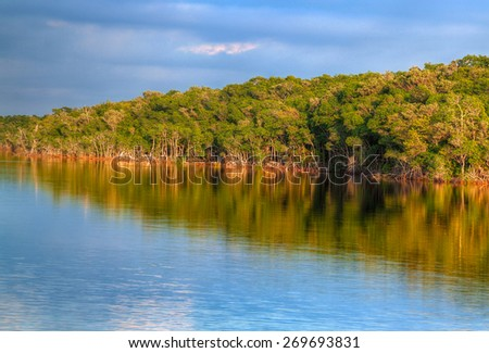 FL-Everglades National Park-Coot Bay. While boating on Coot Bay, numerous baby crocodiles were spotted as well as lots of bird species.  Several types of mangroves were prevalent. - stock photo