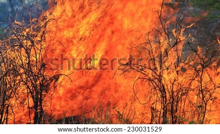 Flame and Fire Background - Colors of Burning Heat - Iconic Tool of Man's Survival - stock photo
