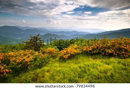 Flame Azalea Blooms Blue Ridge Mountains Roan Highlands State Park on Appalachian Trail - stock photo