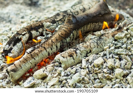 Flame of firewood. Closeup of black charcoal
