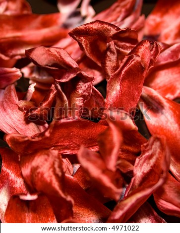 Flames - dried tulip petels