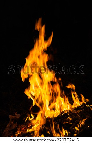 flames from a fire on a black background. picture