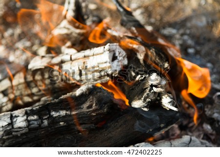 flames in the fire from burning saxaul in nature