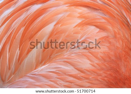 flamingo, close up full frame macro of caribbean or america flamingo wings showing pink feathers, found from mexico to south america. exotic long necked pink bird similar stork - stock photo