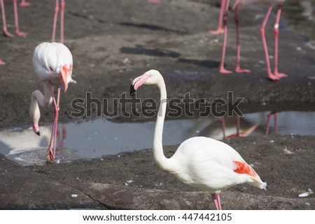 Flamingo close up with others in background - stock photo