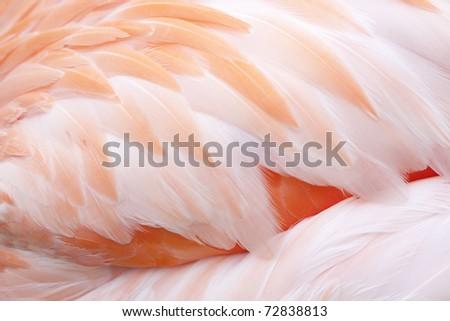 flamingo feathers - stock photo