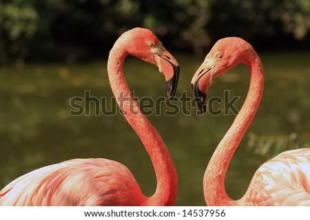 Flamingo love - stock photo
