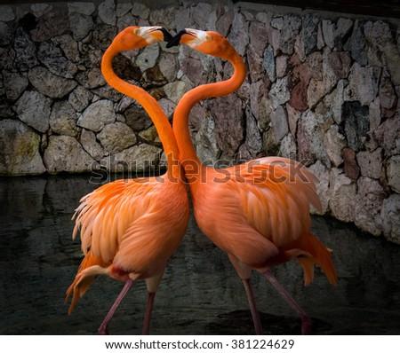 Flamingo -Views around the Caribbean island of Curacao - stock photo