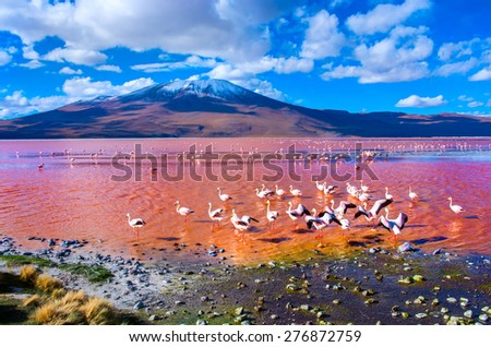 Flamingoes in Laguna Colorada , Uyuni, Bolivia - stock photo