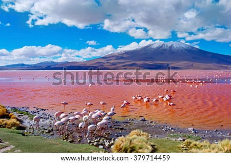 Flamingoes in Laguna Colorada , Uyuni, Bolivia