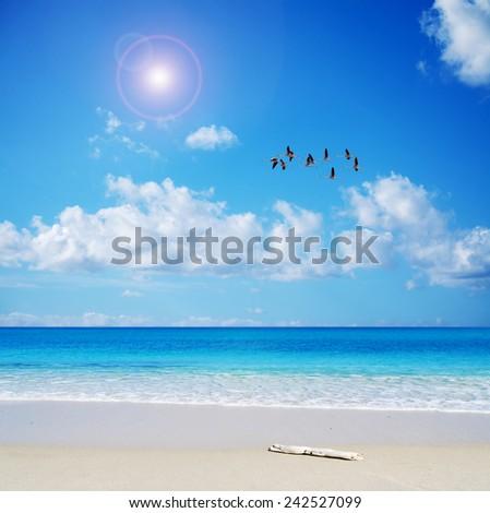 flamingos flying over the shore . Shot in Sardinia, Italy - stock photo