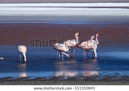 Flamingos in Red Lagoon
