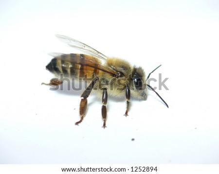 Flash bee side - stock photo