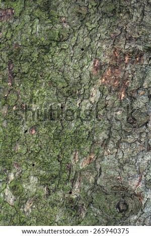 Flat Pine Tree Bark Background - stock photo