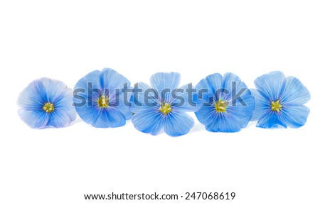 flax flower on a white background - stock photo