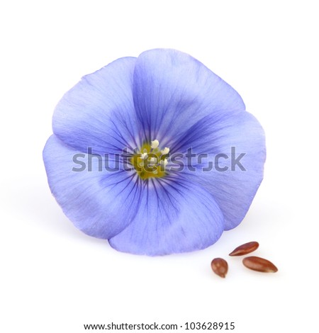 Flax flower with seeds on a white background - stock photo
