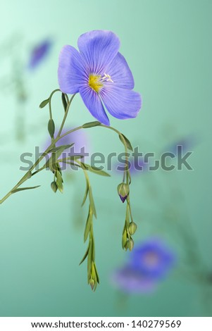 Flax flowers close up on a green background - stock photo