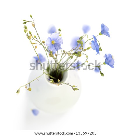 Flax flowers in a vase isolated on white background - stock photo