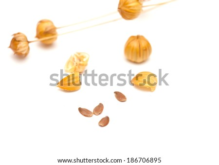 flax seedheads  and linseed isolated on white - stock photo