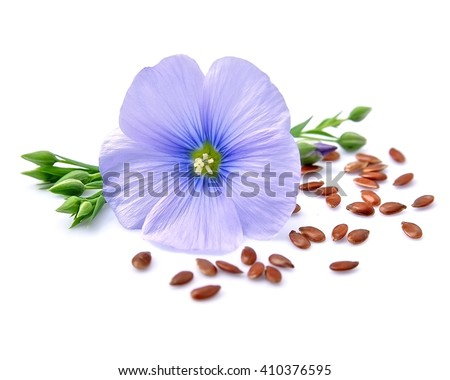 Flax seeds with flowers close up on white - stock photo