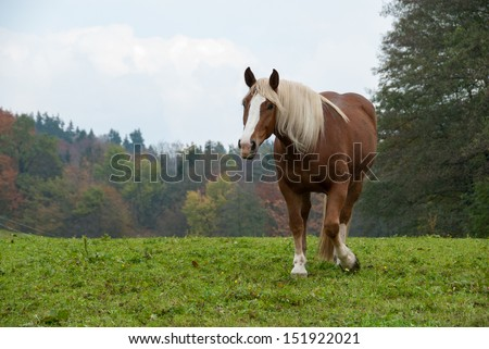 Flaxen Chestnut Horse in a Fall Field
