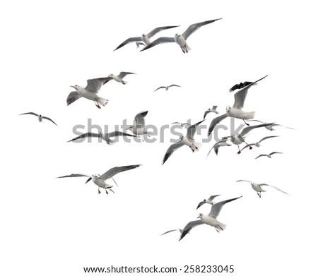 flaying seagulls - stock photo